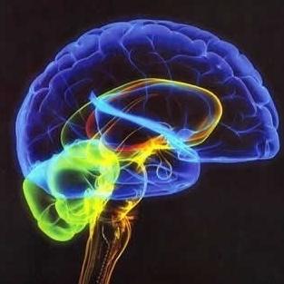 cerebro holograf