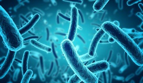 bacterias-azuis
