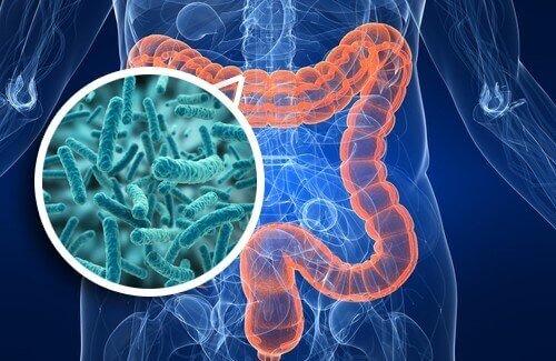 flora-intestinal