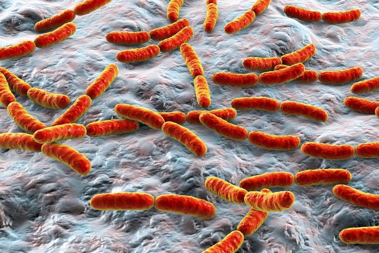 microbiota-intestinal-e1553120576366-768x513